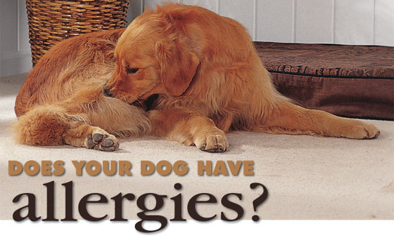 how to tell if dog has allergies